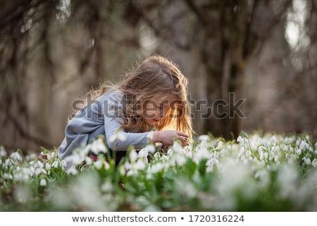 branco · floresta · primeiro · flores · da · primavera · clareira · folha - foto stock © jaycriss