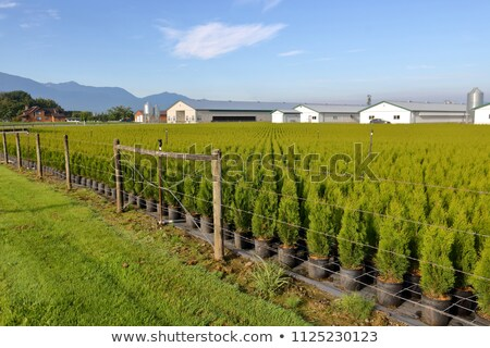 Stock at a nursery or landscaping business Stock photo © juniart