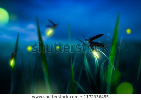 Illusztráció absztrakt természet fény üveg csillagok Stock fotó © adrenalina