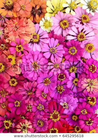 aggódó · menyasszony · fiatal · gyönyörű · nő · izolált · mosoly - stock fotó © fotorobs