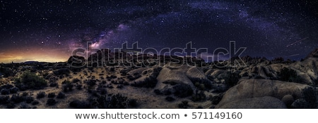 Camping at Night in Joshua Tree Park Stock photo © tobkatrina