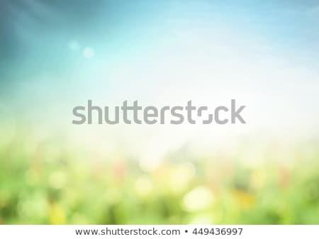Verde blanco naturaleza Blur vector primavera Foto stock © gubh83