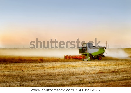 combine harvesting rape stock photo © artush