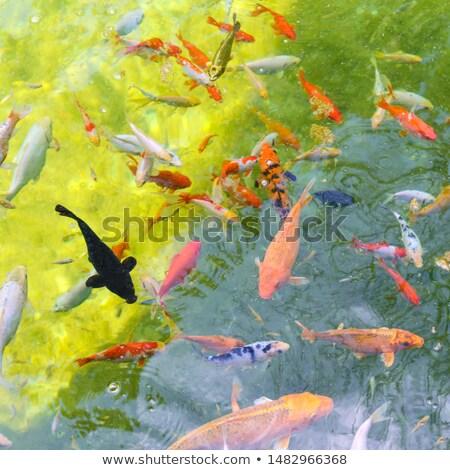 Veel vis beweging mooie wateroppervlak top Stockfoto © Hermione