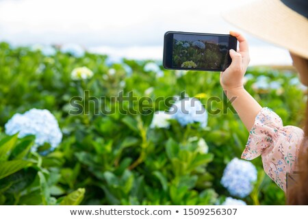 female hand with mobile phone and hydrangea Stock photo © compuinfoto