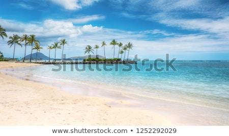 Beach scene with coconuts area Stock photo © luissantos84