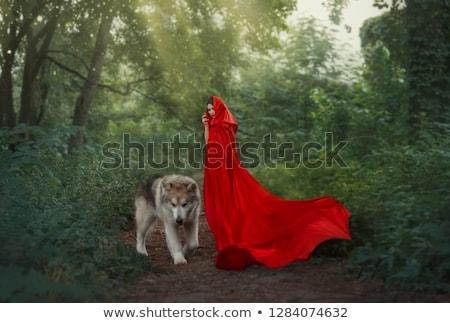 Rouge loup permanent seuls illustration nature Photo stock © bluering
