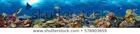 Színes korallzátony vízalatti illusztráció háttér művészet Stock fotó © bluering