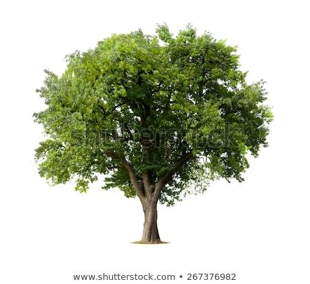 manzana · hojas · aislado · blanco · superior · vista - foto stock © zerbor