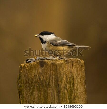 Noir oiseau arbre nature plumes morts Photo stock © BrandonSeidel