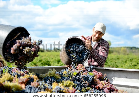 para · winogron · działalności · dziedzinie - zdjęcia stock © boggy