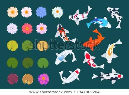先頭 表示 ニシキゴイ 魚 スイミング 池 ストックフォト © colematt