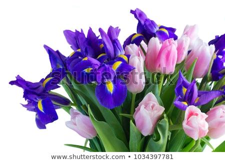 Kék tulipánok virágcsokor közelkép fából készült retro Stock fotó © neirfy