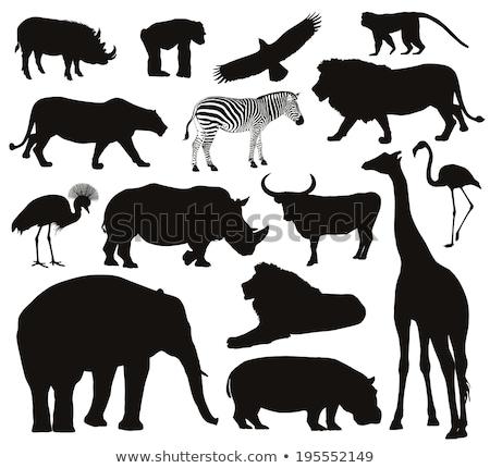 állat skicc csimpánz illusztráció természet háttér Stock fotó © colematt