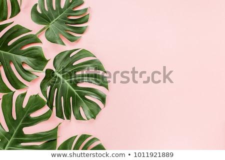 En az palmiye yaprağı çerçeve palmiye yaprağı Stok fotoğraf © solarseven