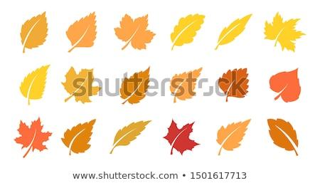 csoport · őszi · levelek · szett · illusztráció · köteg · erdő - stock fotó © Blue_daemon
