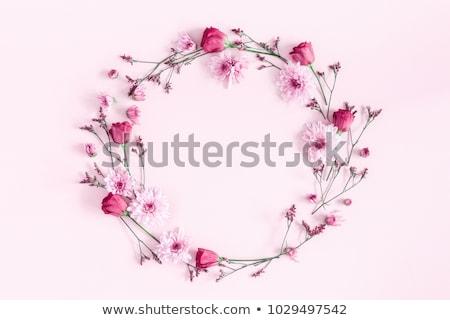 steeg · bloemen · roze · wenskaart · Rood · rose - stockfoto © cienpies