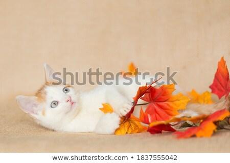 Kiscicák játék halloween tök digitális állat kiscica Stock fotó © user_10003441