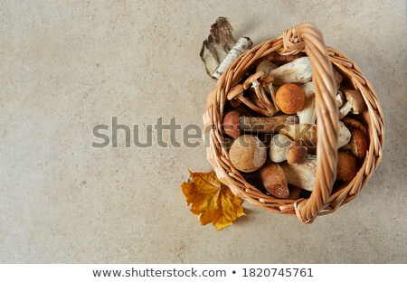 Basket full of fresh boletus mushrooms in forest. Top view stock photo © Virgin