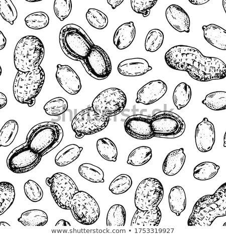 Dibujado a mano cacahuates vector agricultor mercado Foto stock © Margolana