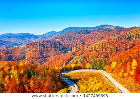 Amazing view with colorful autumn forest with asphalt mountain road. Beautiful landscape with empty  Stock photo © galitskaya