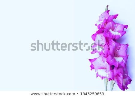 Abstract floral holiday art background, purple blooming flower p Stock photo © Anneleven