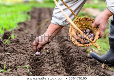 Farmer Sowing Seeds in Soil Farming Woman on Field Stock photo © robuart