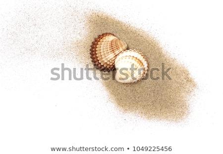 Witte zand stenen schelpen visnet Stockfoto © ThreeArt