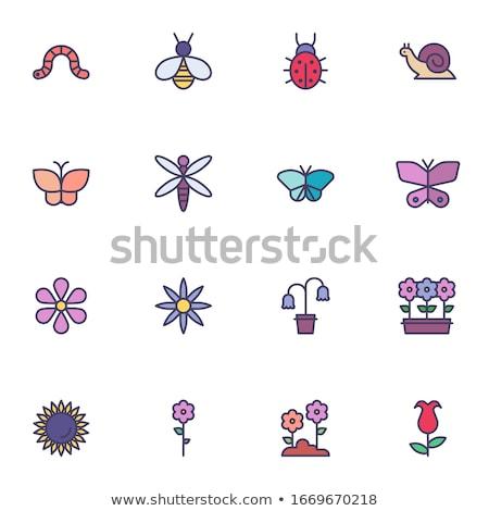 Insetos os ícones do web usuário interface projeto Foto stock © ayaxmr