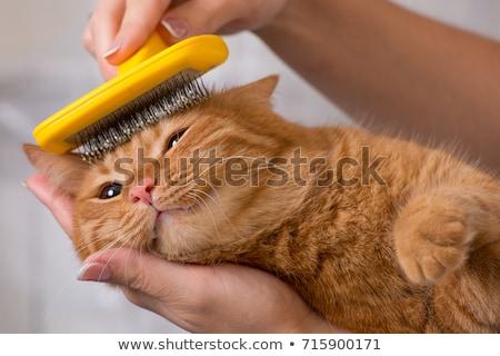 grooming cat Stock photo © pterwort