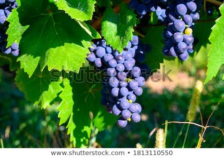 Vino lievito bottiglia tecnologia vite giallo Foto d'archivio © deyangeorgiev