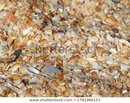 пляж крушение коралловые снарядов структуры поверхность Сток-фото © pzaxe