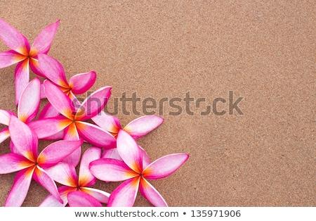 花 · 白 · 花 · 自然 · 赤 · スパ - ストックフォト © witthaya