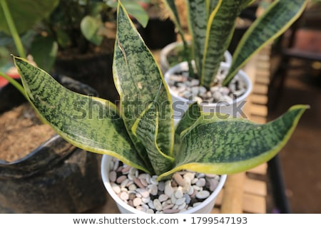 huis · plant · witte · afrika - stockfoto © michey