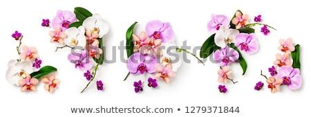 Stockfoto: Geel · orchidee · arrangement · plastic · bloempot · witte