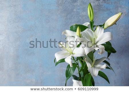 páscoa · lírio · planta · florescer · azul · primavera - foto stock © varts