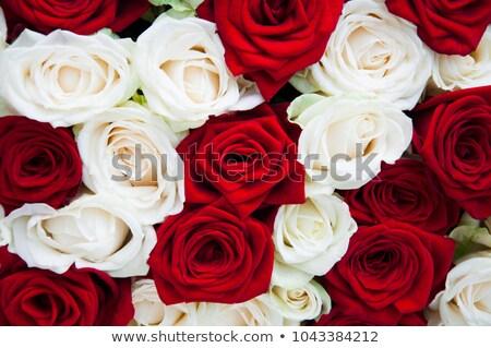 Stock fotó: Virágcsokor · piros · fehér · rózsák · váza · rózsa