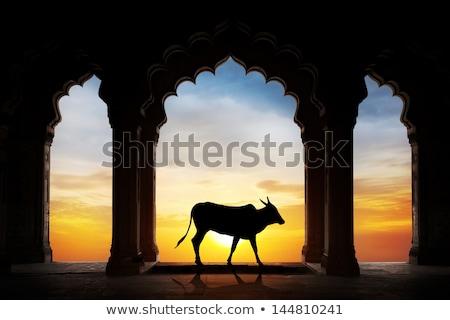 kudde · geiten · indian · boerderij · natuur · leven - stockfoto © mikko