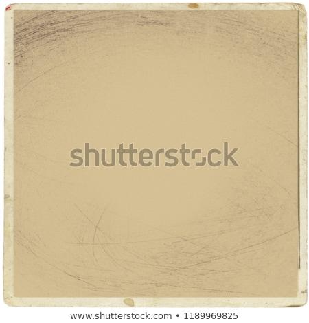 Retro Polaroid madarak terv elemek szalag Stock fotó © BibiDesign