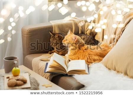 Leisurely cat Stock photo © wxin