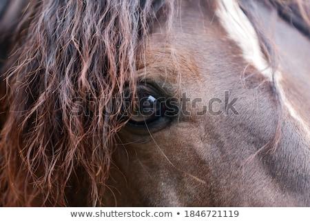 bruin · veulen · paard · boerderij · scène · natuur - stockfoto © njnightsky