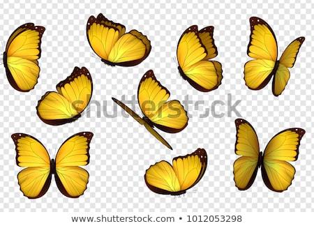 borboleta · laranja · amarelo · isolado · ilustração · branco - foto stock © m_pavlov