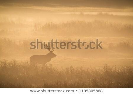 ハンター · 日没 · 実例 · 男 · 自然 · シルエット - ストックフォト © martin_kubik