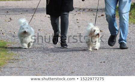 Kettő kutyák portré szőnyeg bent pár Stock fotó © elenaphoto