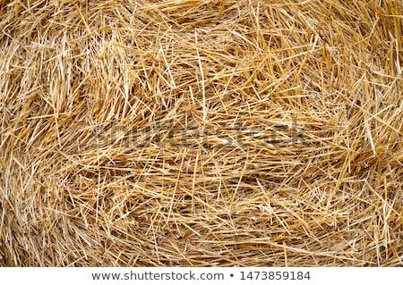 Fieno paglia campo texture agricoltura Foto d'archivio © ssuaphoto