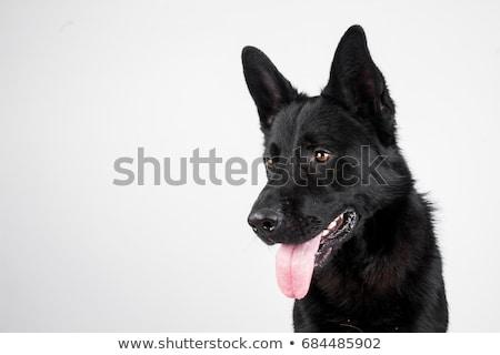 piedi · cane · sagome · natura · nero · bianco - foto d'archivio © liolle