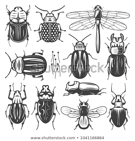 Set of different types of bugs Stock photo © bluering