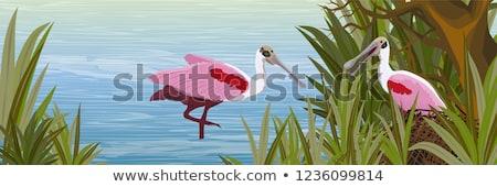 Vogel roze safari dierentuin wildlife Stockfoto © hamik