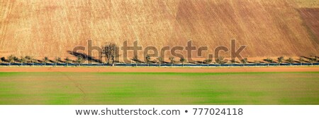 Rurale regione panorama alberi campo inverno Foto d'archivio © meinzahn