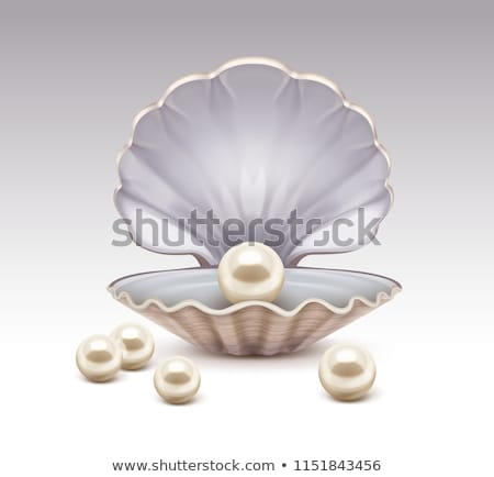 Closeup of White Pearl on Vector Illustration Stock photo © robuart